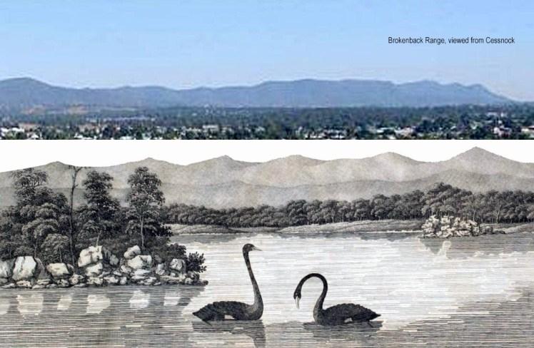 Black swans 8