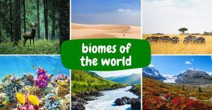 HuntersWoodsPH Montessori Geography Biomes