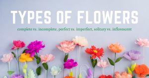 hunterswoodsph Montessori botany Types of Flowers