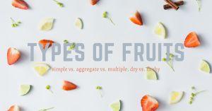 hunterswoodsph Montessori botany Types of Fruits