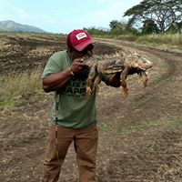 Hunt Iguana | Guided Safari's | Puerto Rico