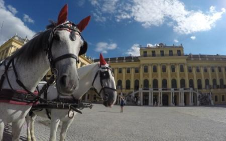 Schönbrunn Palace Fiaker