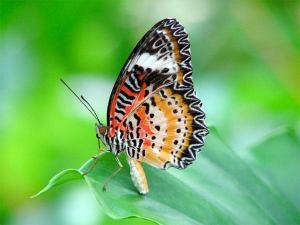 Pentax-PTX62216-8.5x21mm-Papilio-Binoculars05