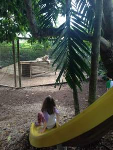 Sliding down to watch the wolf pack at Safari Edventure in Homestead, Florida.