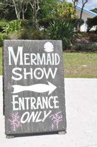 What to do in Tampa with Kids? Go to a mermaid show...and much more. www.huntingforrubies.com
