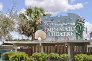 What to do in Tampa with Kids? See the mermaid show that is celebrating its 70 year anniversary...and much more. www.huntingforrubies.com