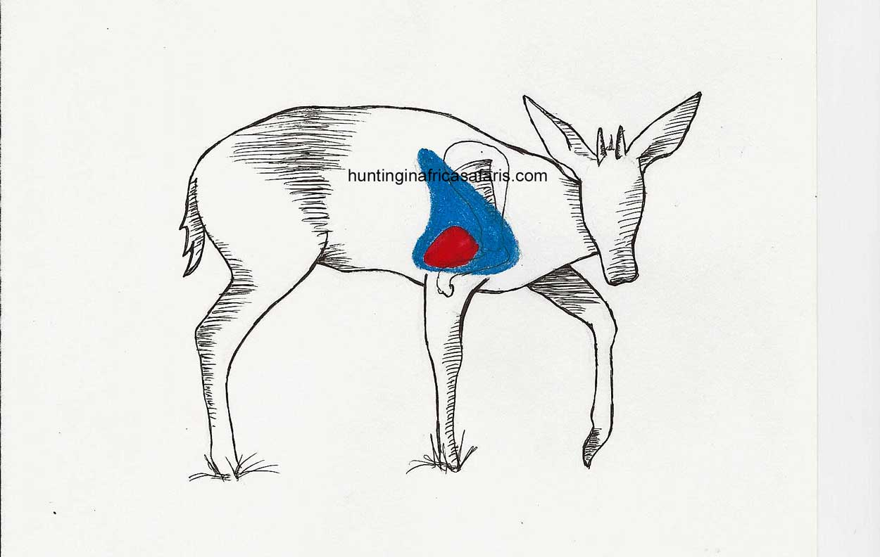 Hunting Duiker South Africa With Mkulu African Hunting Safaris