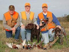 Pheasant Hunting In Nebraska - 855-473-2875