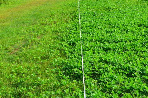 Food Plot Fencing Options Hunting And Conservation News