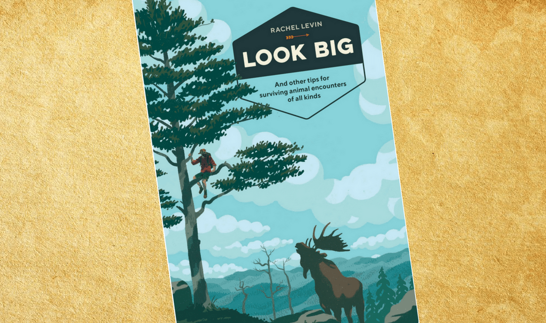 Book Review Look Big by Rachel Levin