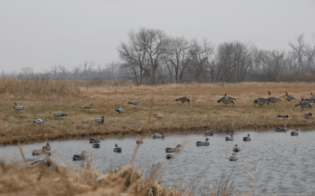 Migratory Bird Framework and Hunting Opportunities for Veterans and Kids Act