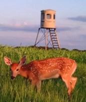 Food Plots, Doctors Hunting Land, Camo Camers, Muddy Fields, 360° Shooting Views, Deer Hides, Bow Hunters Shot, Feed Corn, Feeders