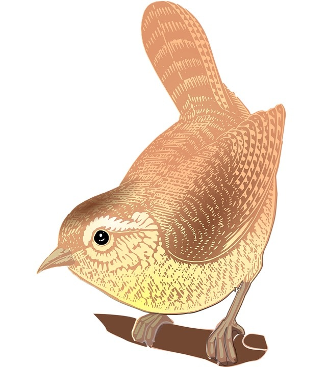 Read more about the article Hunting the wren – the hunt begins