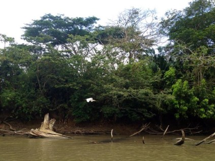 Caño Negro Boat Tour