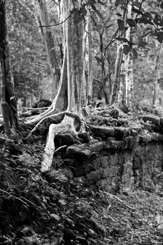 cambodiasept2015_MG_3856
