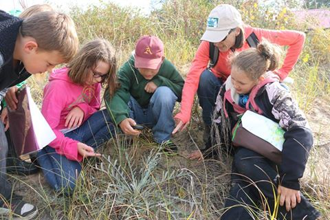 Students study Pitcher's thistle, a rare plant on Big Charity Island