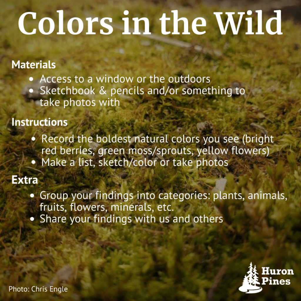 Nature activity card colors in the wild