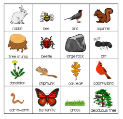 Nature bingo cards