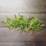 春菊間引きました〜ありがたくいただきます🍽#超#狭小#プランター#農園#春菊#シュンギク#間引き