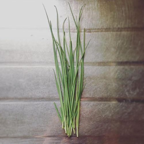 今日の収穫ネギは無限に再生するのかな?#ネギ#収穫#超#狭小#プランター#農園#日報