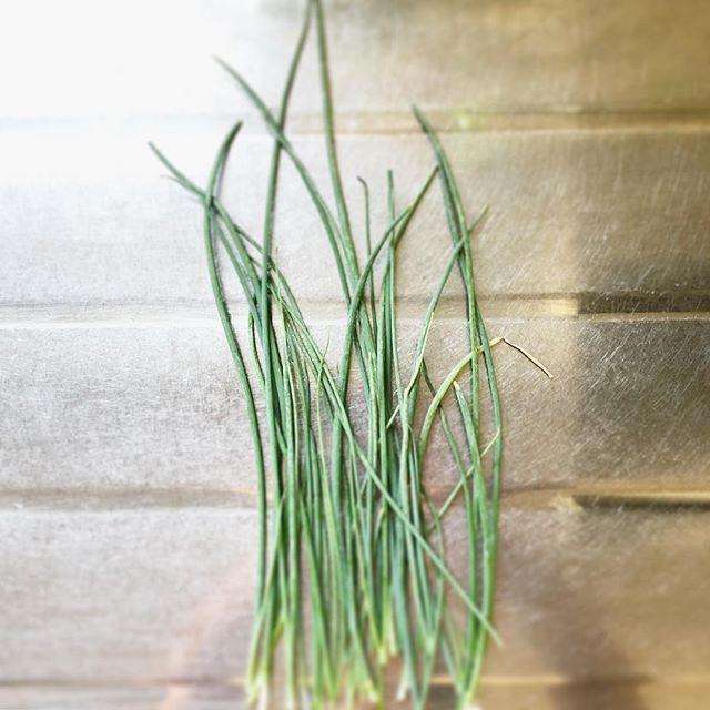 小ネギを収穫。ざる蕎麦シーズンには助かります。毎回、白っぽくカサカサになってしまうのは栄養不足か病気なのかな〜1番大きなカタツムリは、ネギプランターに定住している模様。少し土に潜って眠るらしい#小ねぎ#蕎麦好き#収穫#超狭小#プランター#農園