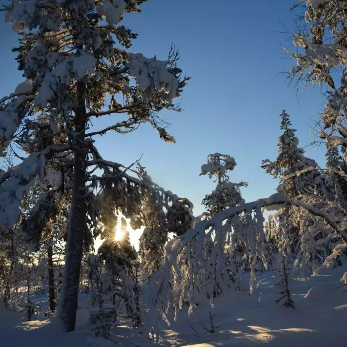 Lapland sweden with husky tours