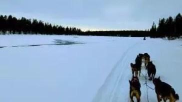 torne river dog sled