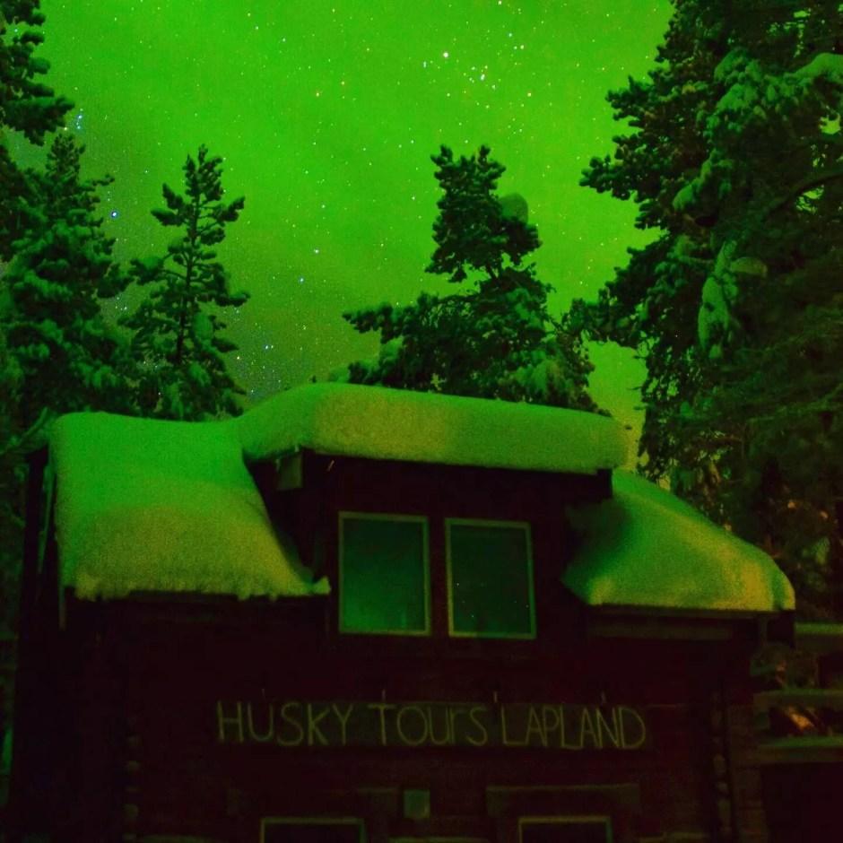 swedish aurora husky