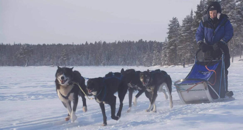 Husky Tours Drive your own team Kiruna