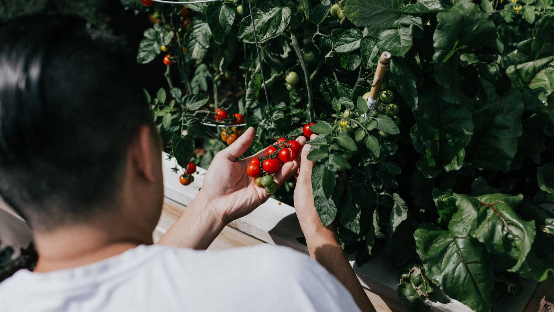 How Does Smart Garden Work