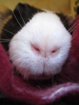 Buddy - My piggilicious lips