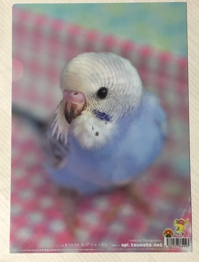 掛川花鳥園のお土産のクリアファイル