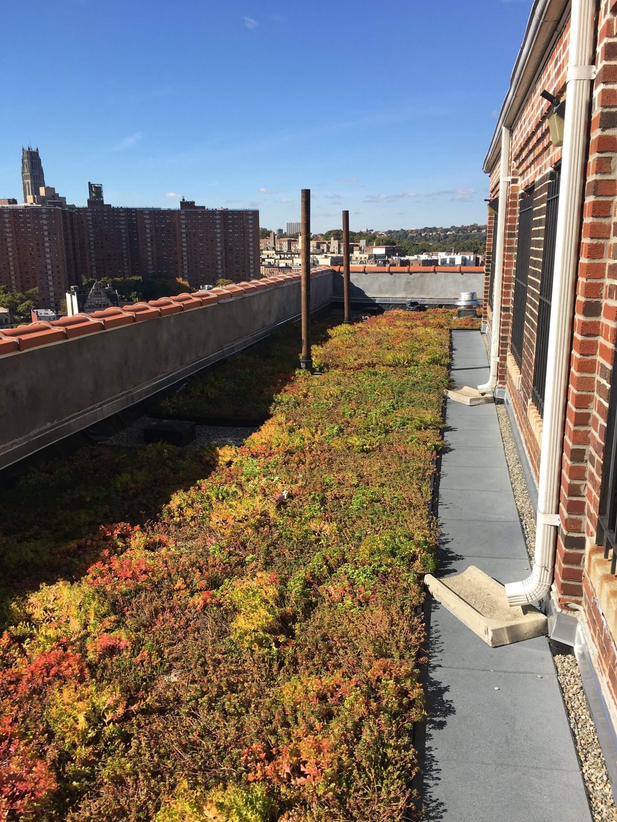 Logan Gardens - NYC Rooftop Gardens - Highview Creations
