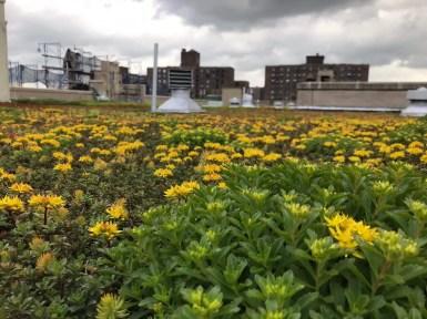 Highview-Bishop-Loughlin-Green-Roof-NYC1