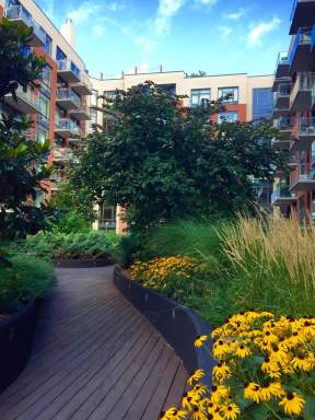 Highview Creations-101 Bedford-Green Roofs NYC 2