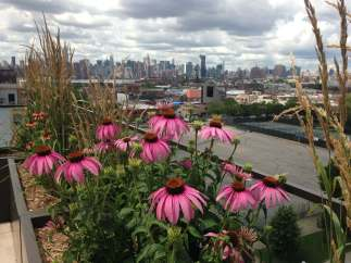 Highview Creations-101 Bedford-Green Roofs NYC 8