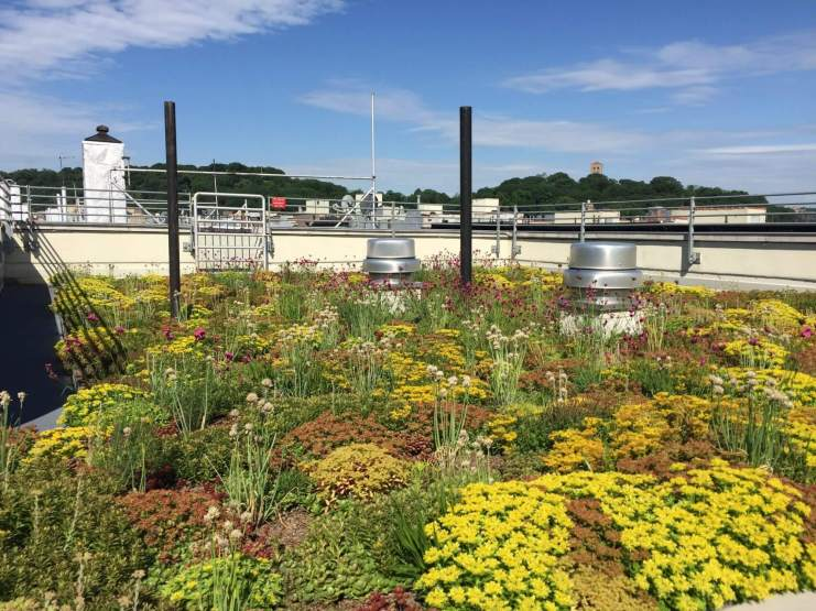 Highview Creations-552 Academy-Green Roof NYC 14