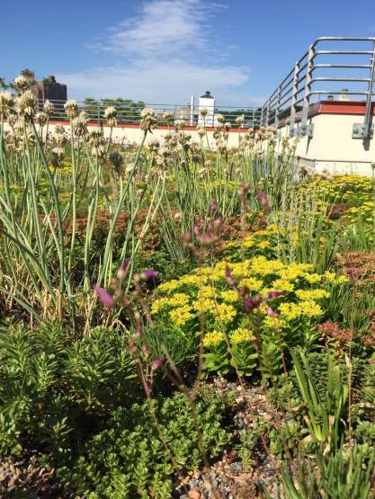 Highview Creations-552 Academy-Green Roof NYC 15
