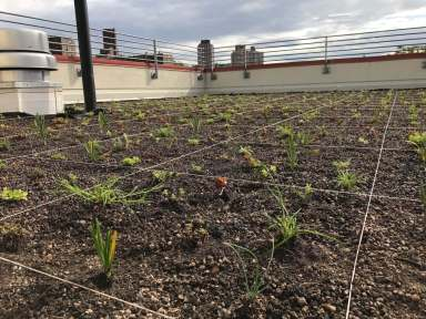 Highview Creations-552 Academy-Green Roof NYC 4