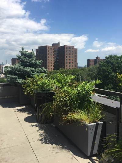 Highview Creations-FH Green Roof-NYC-4