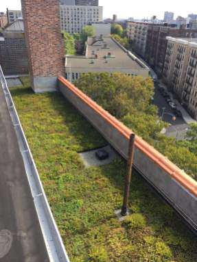 Highview Creations-Green Roof NYC-16