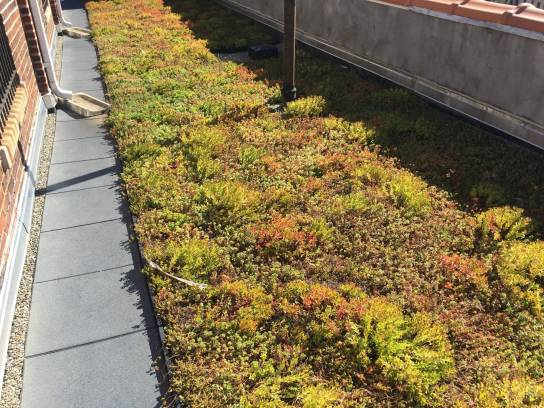 Highview Creations-Green Roof NYC-2