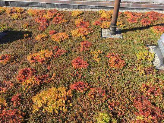 Highview Creations-Green Roof NYC-4