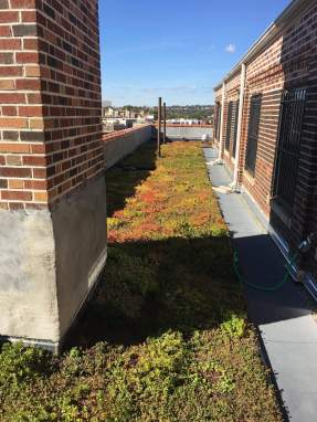 Highview Creations-Green Roof NYC-6