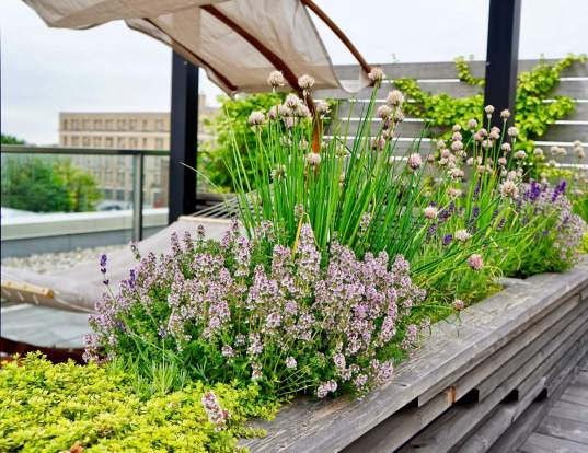 green roof installed and designed by Highview Creations