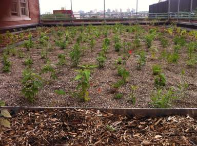Highview Creations-MS 442 Green Roof-NYC-8