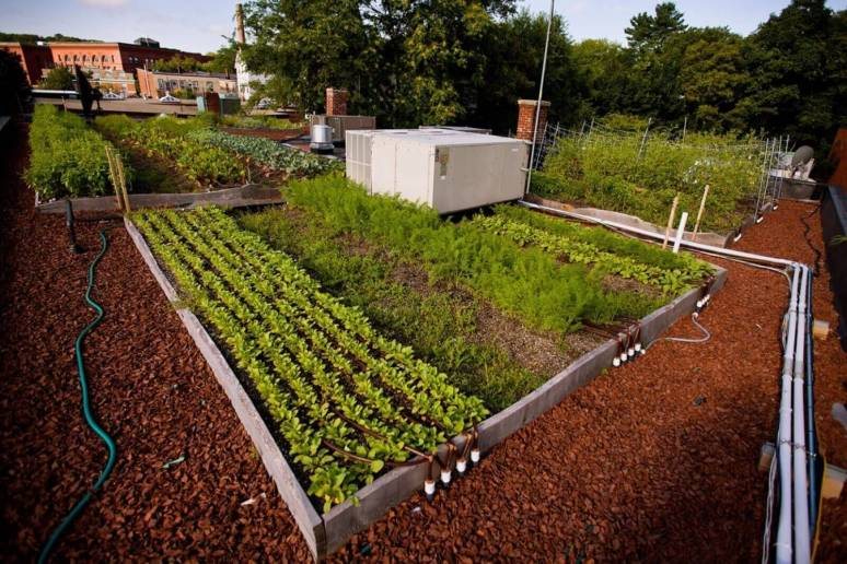 Highview Creations-Rooftop Farm-1