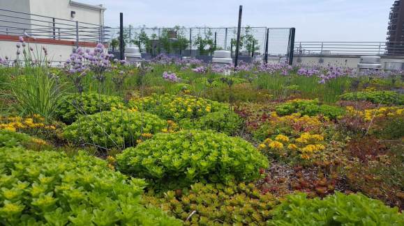 Highview Creations_green roof_nyc7