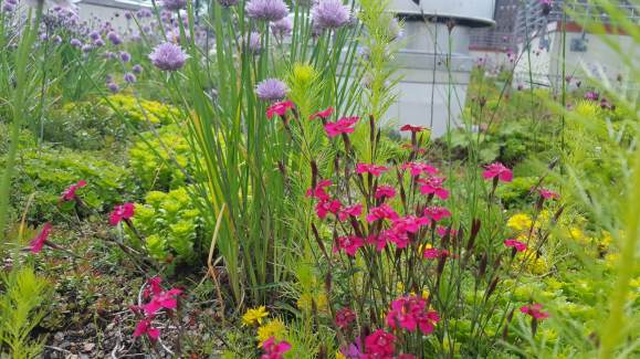 Highview Creations_green roof_nyc8