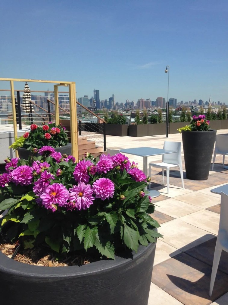101 Bedford - Brooklyn Rooftop Garden Green Roof - Highview Creations